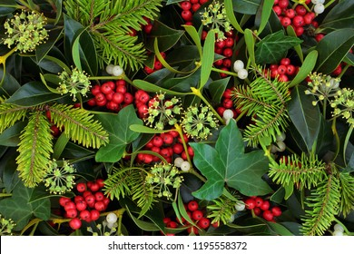 Holly, ivy and mistletoe Christmas and winter greenery background. Traditional Christmas greeting card for the holiday season.