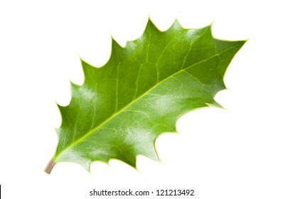 holly leaf isolated on white