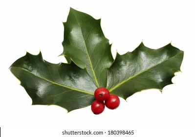 holly leaves and berries on white background
