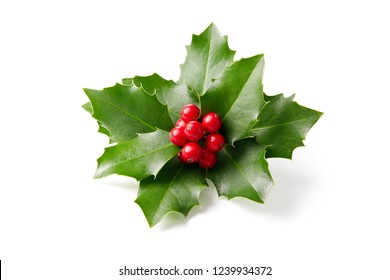 Holly leaves decoration with red berries on white background.