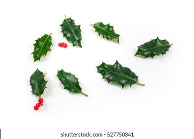 Holly leaves on white background