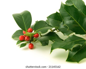 Holly leaves with red berries