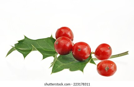 holly, red berries, isolated,