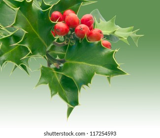 Holly Sprig on white