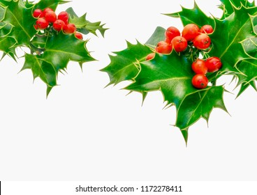 Holly Sprigs on white