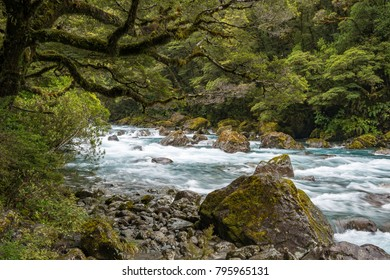 Hollyford river in Fiordland National Park, New Zealand