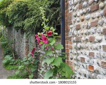 Hollyhocks growing alongside an old flint cottage wall.