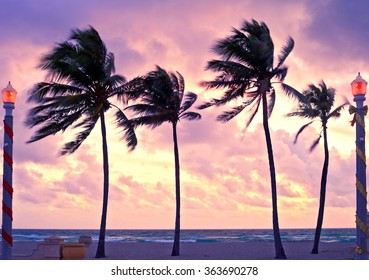 Hollywood Beach near Miami Florida, beautiful colorful sunrise with palm trees, ocean and cloudy sky