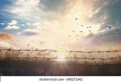 Holocaust memorial days concept: Silhouette of birds flying and barbed wire at sunset background