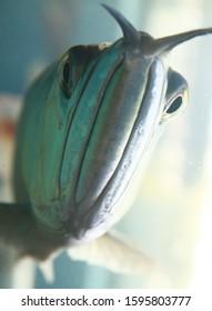 holy arawana fish vasthu chinese