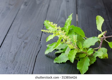Holy Basil (Ocimum sanctum) on a wooden background selective focus