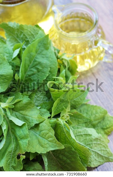 holy basil oil with holy basil