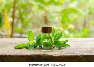 Holy Basil or Tulsi Essential Oil in bottle with Branch of Holy Basil on wooden with blur background on sunny day.