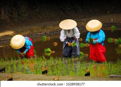 The holy festival to pray for a good rice harvest in Fushimi inari Shrine, Kyoto / Japan