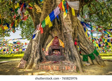 holy ficus tree with a old buddhist temple with flags in the birth place of buddha in nepal. lumbini