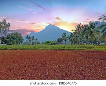 The holy mountain Arunachala in Tiruvanamalai Tamil Nadu India at sunset