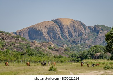Holy Mountain of Matopos national park, Zimbabwe African village with cows and cattle