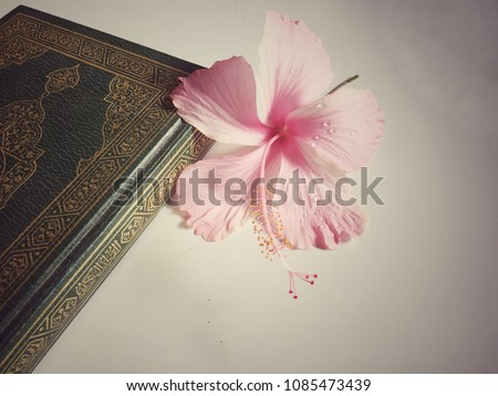 Holy Quran Beautiful Pink Hibiscus Flower Stock Photo Edit Now