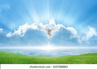Духовная птица летит в небе, яркий свет светит с неба, белый голубь символ любви и мира спускается с неба, зеленая трава на весеннем лугу