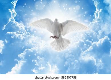 Духовная птица летит в небе, яркий свет светит с неба, белый голубь - символ любви и мира - спускается с неба.