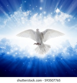 Holy spirit bird flies in skies, bright light shines from heaven, white dove - symbol of love and peace - descends from sky.
