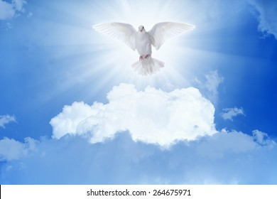 Holy Spirit Dove Images, Stock Photos & Vectors | Shutterstock