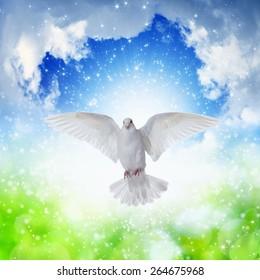 Holy spirit dove flies in blue sky, bright light shines from heaven, gospel story