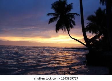 holyday, sunrise, Palm