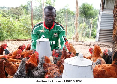 Homa Bay,Kenya-29-July-2016 Youth chicken farmers who are rearing indigenous breeds to earn livelihoods amidst high youth unemployment rates in Homa Bay County, Kenya.