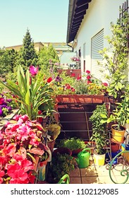 Home balcony with green foliage and multicolor potted flowers in spring
