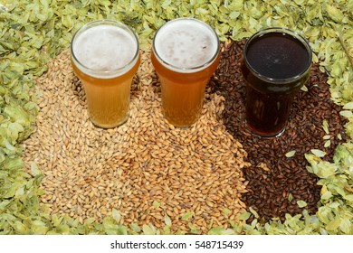 Home brew beer brewing ingredients with various grains illustrating different color and the beers produced from different mixtures of grains surrounded by hops