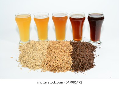 Home brew beer ingredients with various grains illustrating different color and the beers produced from different mixtures of grains