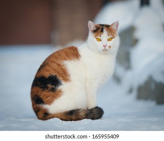 home cat on the snow
