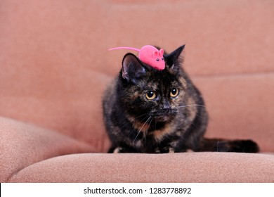 Home cat and pink mouse play