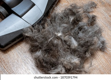 Home cleaning pet fur concept. Close-up of cleaning garbage, pet hair with a brush of an electric vacuum cleaner, top view