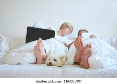 home comfort white dog in bedroom man and woman cuple