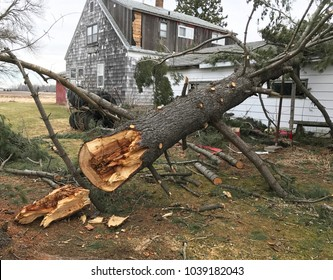 Home damaged from a tree fell by a summer wind storm