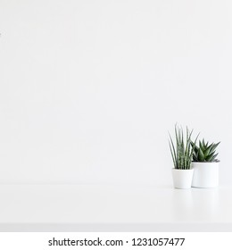 Home decor two succulent plants on white desk or a shelf with white wall for copy space.