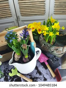 Home decorating in spring time with seedlings of colored flowers. Spring background.