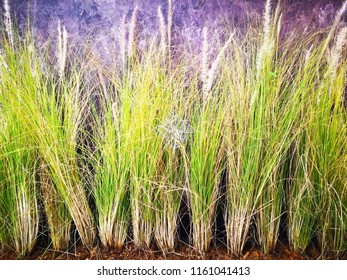 Home decoration concept. Vetiver grass was planted to decorate the loft wall. Selective focus and copy space.