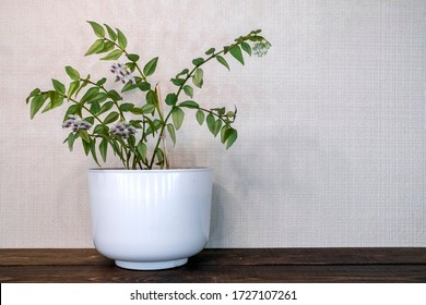 Home decoration. Green home plant on white background. Home garden. Flower care. Stylish home decor. Living room interior