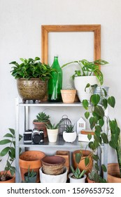 Home decoration with houseplants in hipster room. Tree lover and gardening concept