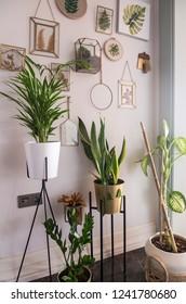 Home design interior beautiful architecture - Shutterstock ID 1241780680