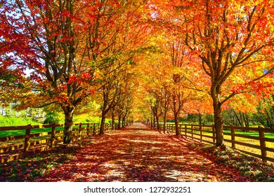 Home driveway during fall season