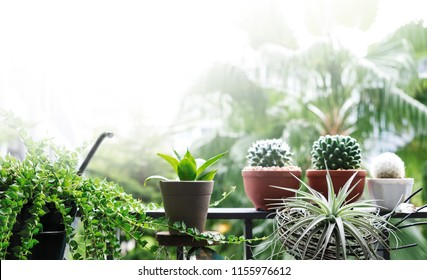 Home and garden concept of tree and plant decoration at balcony with copy space