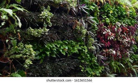Home garden with hanging plant pot on the wall, vertical garden
