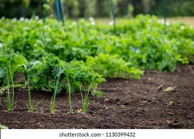 Carrot Plantation Images Stock Photos Vectors Shutterstock