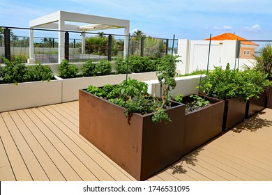 Home garden on an outdoor terrace, with planters to grow tomatoes, herbs, and other vegetables, with a raised deck.