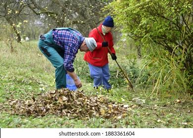 A home gardener rakes autumn fallen leaves on a hump in the garden