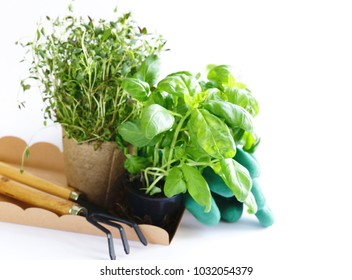 home gardening - flowers and herbs, tools and plants